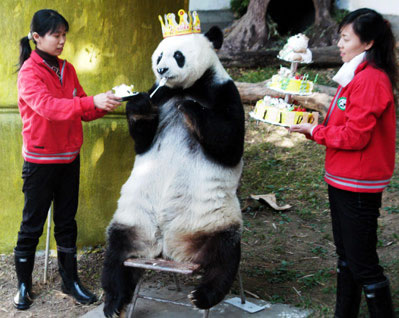 Today is my birthday, and I am King Panda.