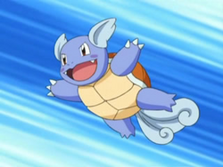 Wartortle on the Anime, owned by May