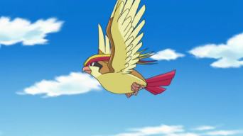 Pidgeot on the Anime. Ash had one but it let it go