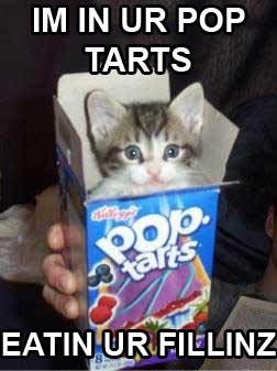 Aw, cute kitty likes poptarts