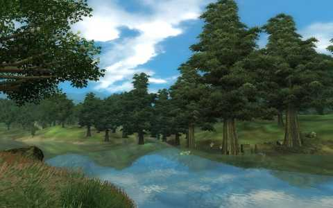 A forest in Oblivion