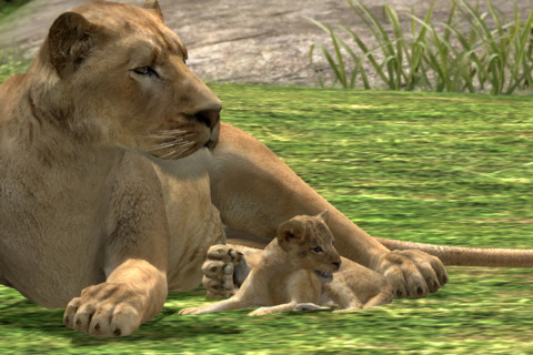A photograph of a lioness and her cub.