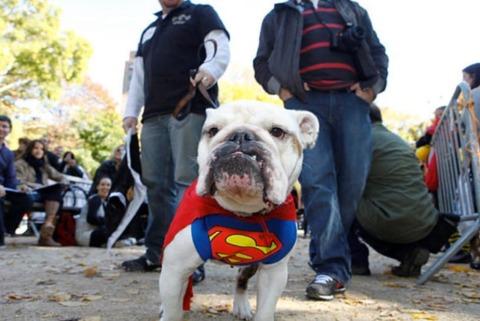 everyone thinks i'm superman so i'll dress that way