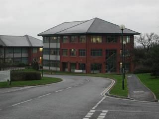 The Lionhead building.