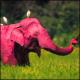 Avatar image for pinkelephant