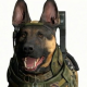 Avatar image for commandergermanshepard
