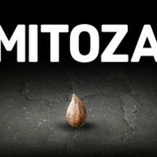 Mitoza