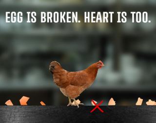 Egg is Broken. Heart is Too.